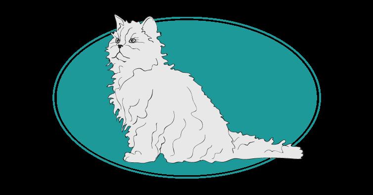Selkirk rex chat animal races : tout savoir sur les chats