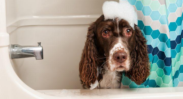 Shampoing laver bien-être Chien