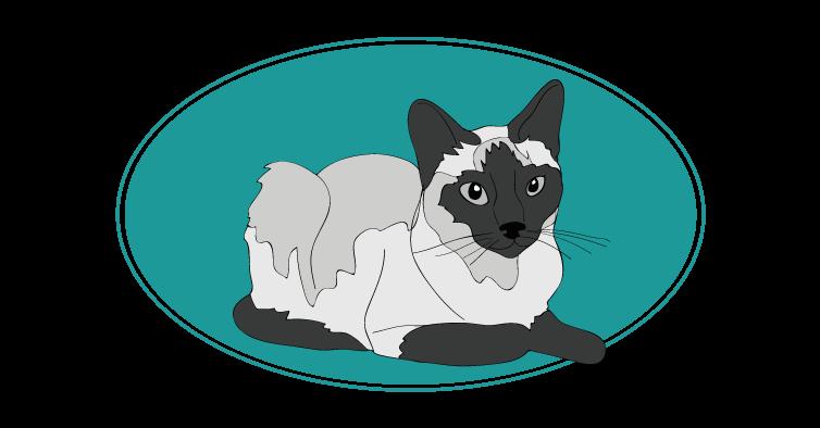 Siamois chat animal races : tout savoir sur les chats