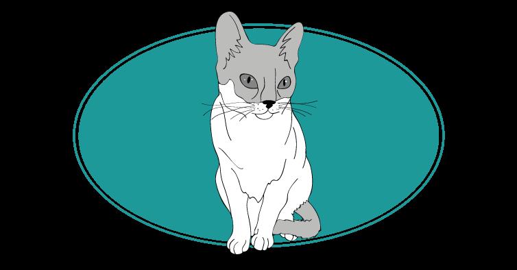 Singapura chat animal races : tout savoir sur les chats