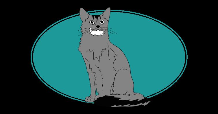 Somali chat animal races : tout savoir sur les chats