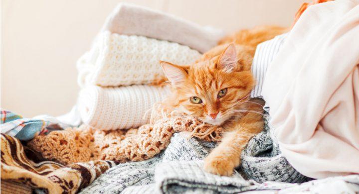 Sommeil du chat : Comprendre le comportement de son chat qui dort dans mes vetements
