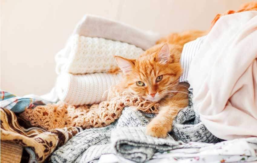 Chaton qui se cache pour dormir