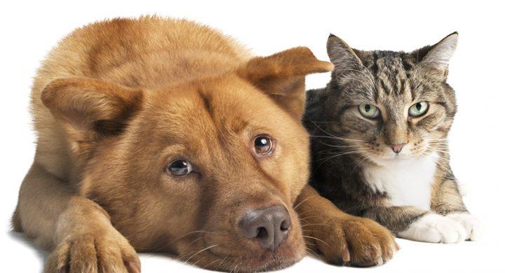 Assurance animaux : Souscription sans questionnaire de santé pour son animal de compagnie