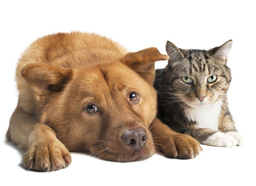 Assurances animauxpagesepsitename - Questionnaire de sante assurance ...