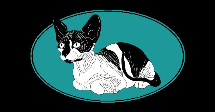Sphynx chat animal races : tout savoir sur les chats