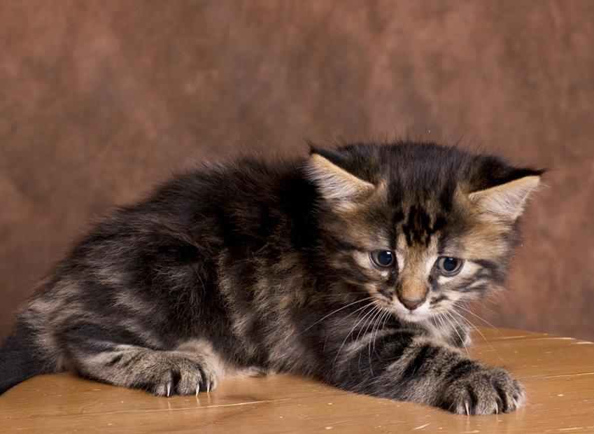 Stress chez le chat : Comment reconnaitre un chat stressé, puis-je transmettre mon stress à mon chat ssé