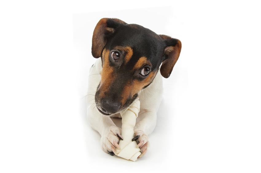 Donner des sucreries industrielles à mon chien : Alimentation