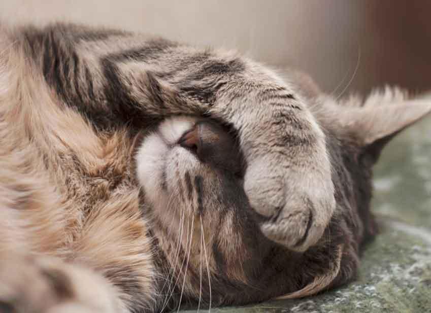 symptome teigne chat