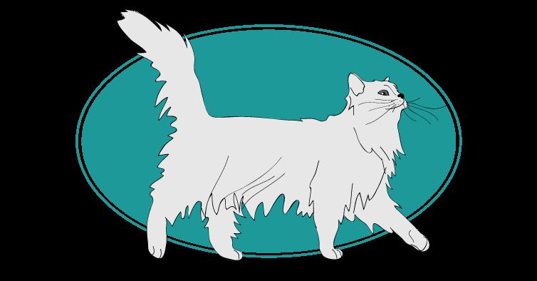 Tiffany chat animal races : tout savoir sur les chats