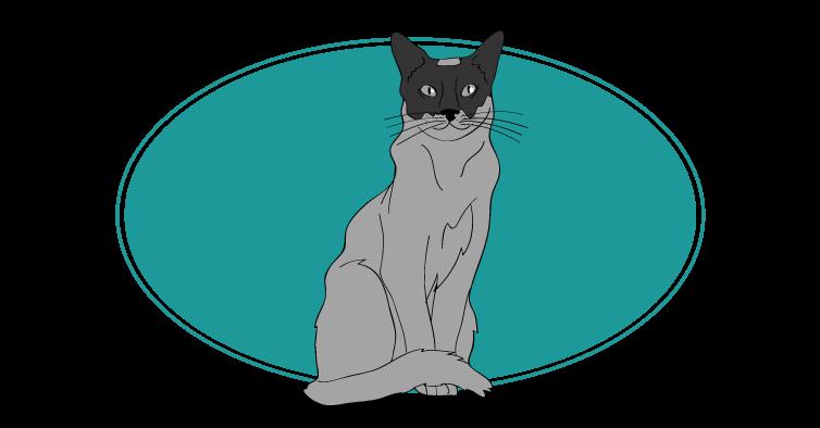 Tonkinois chat animal races : tout savoir sur les chats