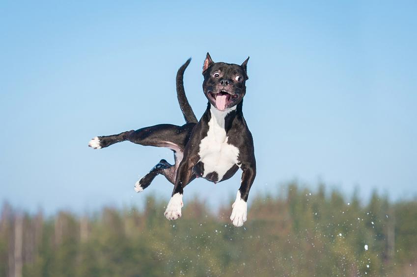 Education chien : trouble du comportement chez le chien