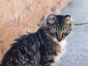 Chat malpropre : Que faire si son chat est malpropre ?
