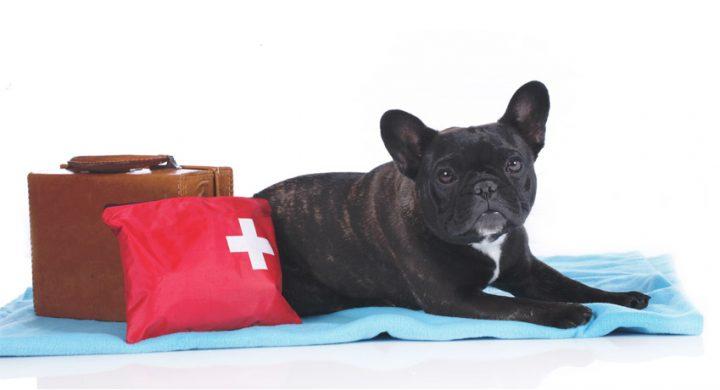 Vacances avec son chien : Les 8 indispensables pour la trousse de secours pour chien