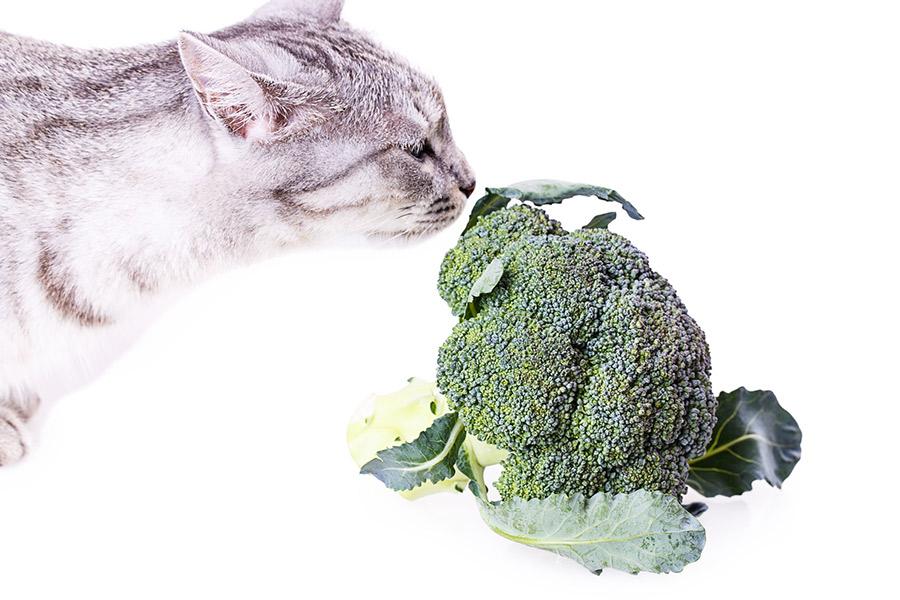 Votre chat peut-il devenir vegetarien : Nourriture