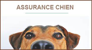assurance chien, assurance chat