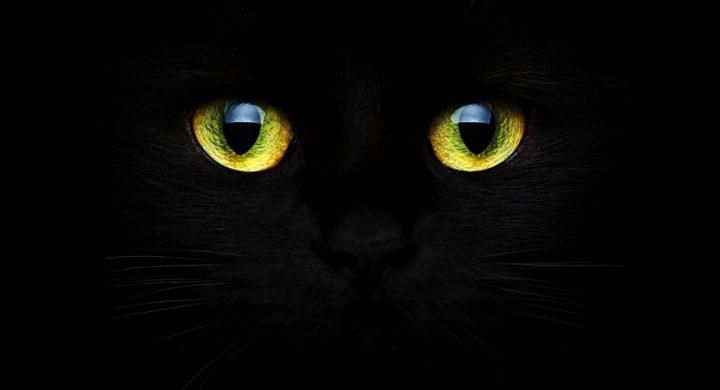 Vision nocturne chat : Pourquoi les yeux des chats brillent dans le noir