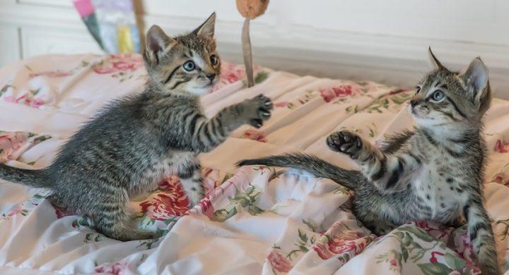 Comprendre son chat : vivre avec un chat actif ou inactif