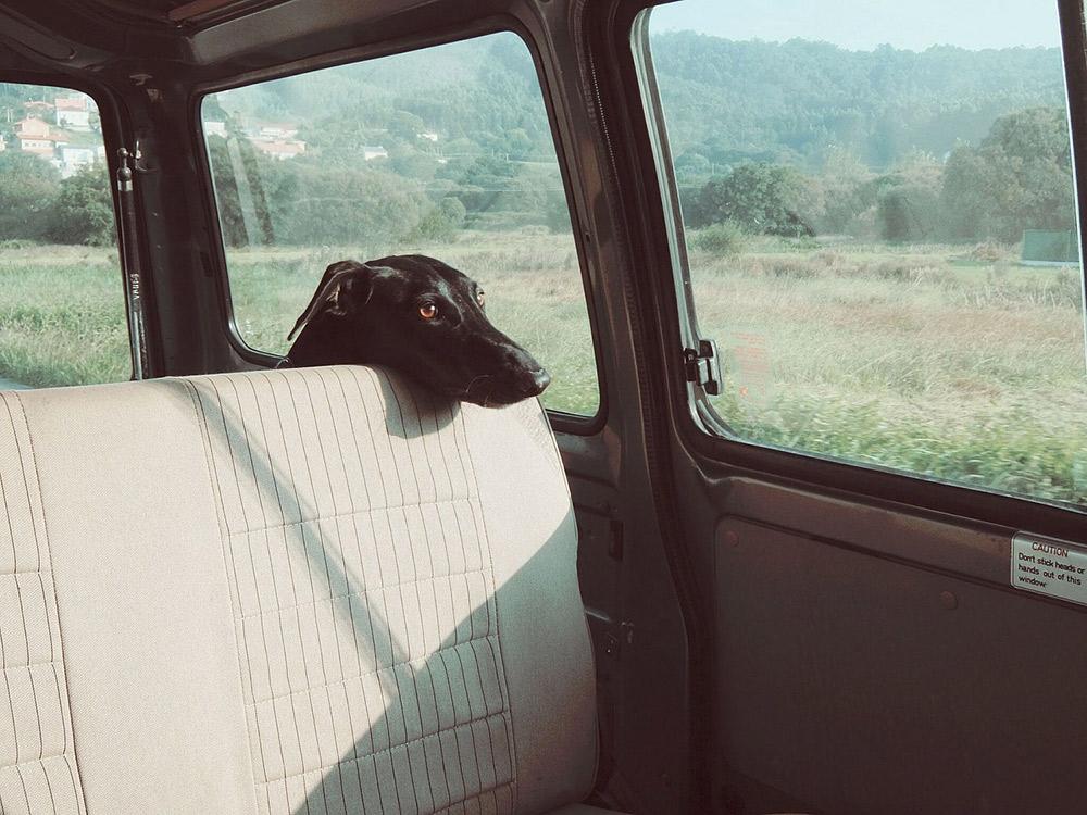Education chien : voyager avec son chien malade