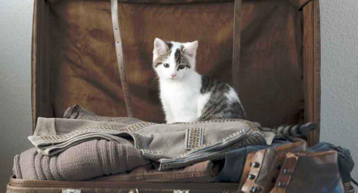 Education chat : voyager avec son chat quelles formalités ?