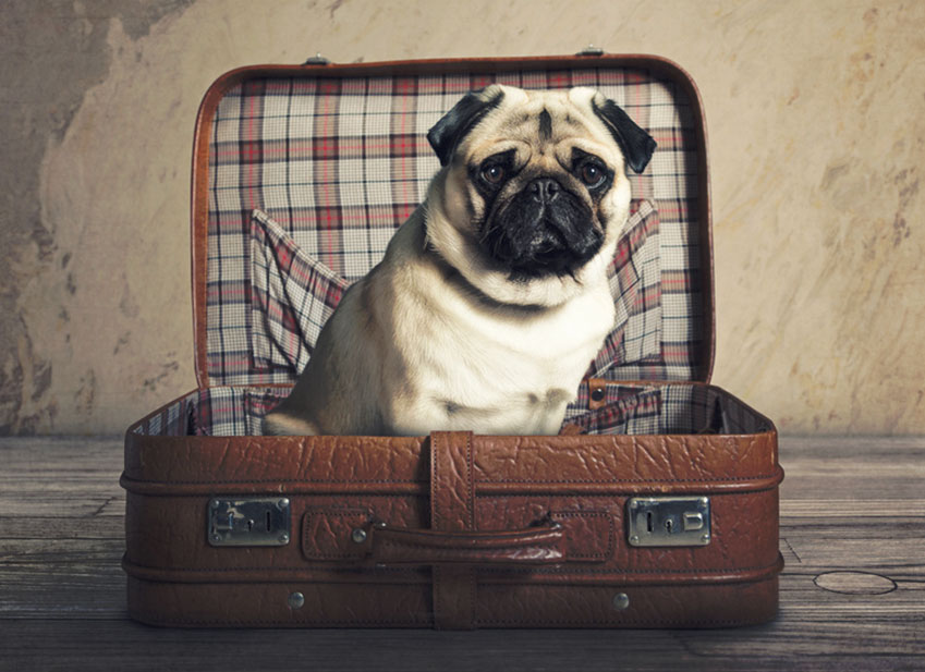 Education chien : conseil pour bien voyager avec son chien