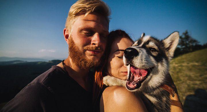 vacances à la montagne avec son chien : quelles précautions ?