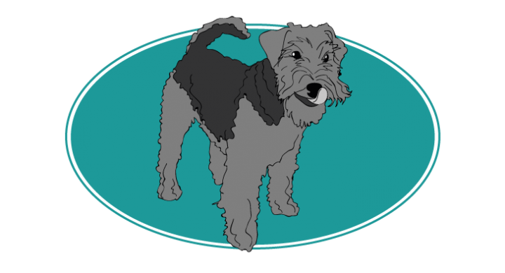 welsh-terrier-assuropoil