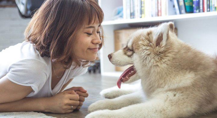 La zootherapie ou thérapie avec les animaux, étude Assur O'Poil